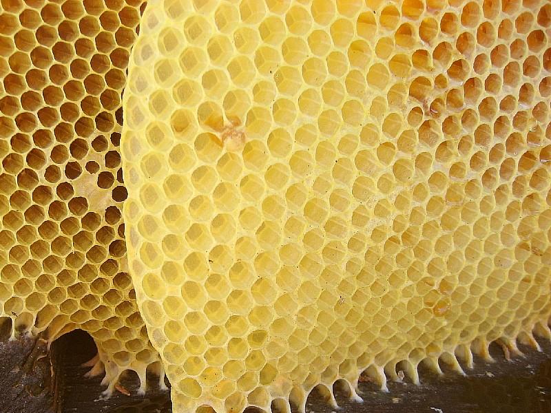 beeswax honeycomb